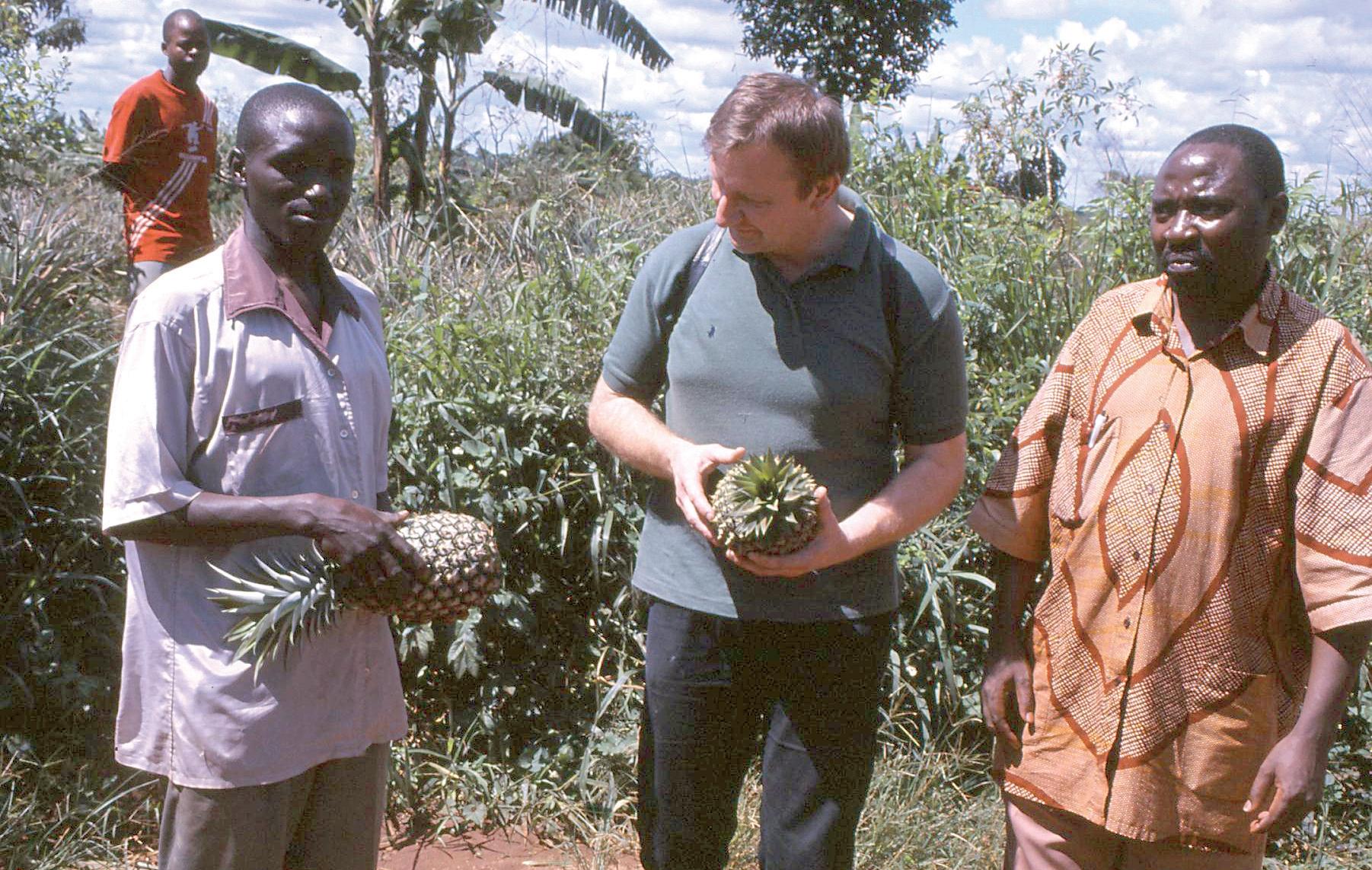 BioUganda Ltd. Ananasplantage