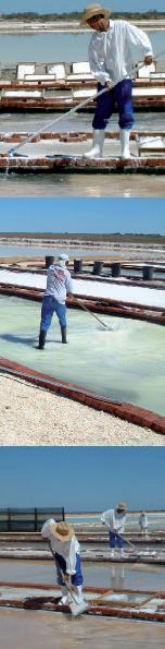 Fairtrade Meersalz feinkörnig: Männer bei der Arbeit auf den Salzfeldern