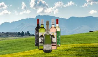 Produktübersicht für Fairtrade Bio Weine und Sekt von Stellar Organics aus Südafrika